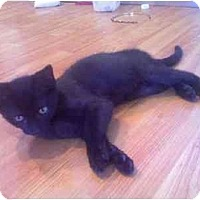 Adopt A Pet :: Jake - Fort Lauderdale, FL