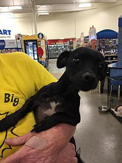Terrier (Unknown Type, Medium) Dog for adoption in Fresno, California - Cole