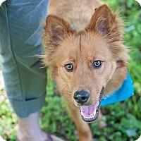 Adopt A Pet :: Tibideaux - Houston, TX