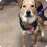 Adopt A Pet :: Paige - El Paso, TX