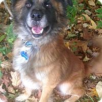 Adopt A Pet :: Hahn - Fennville, MI