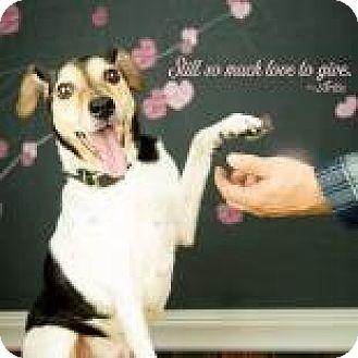 Terrier (Unknown Type, Medium) Mix Dog for adoption in Janesville, Wisconsin - Artie