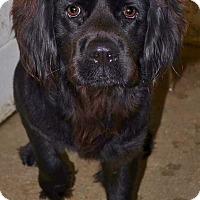 Adopt A Pet :: Smokey - Beaumont, TX