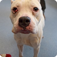 Adopt A Pet :: Carley - Bay Shore, NY