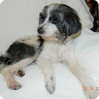 Adopt A Pet :: Pozie - Umatilla, FL