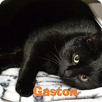 Adopt A Pet :: Gaston - Las Vegas, NV