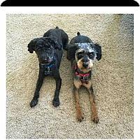 Adopt A Pet :: Wesley and Royal - Alpharetta, GA