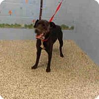 Adopt A Pet :: URGENT ON 4/28  San Bernardino - San Bernardino, CA