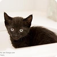 Adopt A Pet :: Gigi - Fountain Hills, AZ