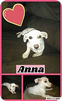 Chihuahua/Dachshund Mix Dog for adoption in Lacey, Washington - Anna