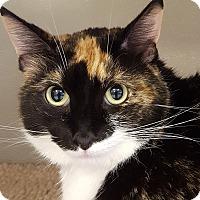 Adopt A Pet :: Princess Leia - Grayslake, IL