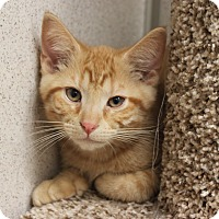 Adopt A Pet :: Tang - Naperville, IL