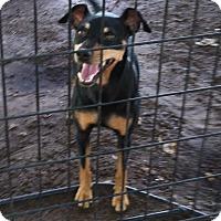 Adopt A Pet :: Kayla - St. Petersburg, FL