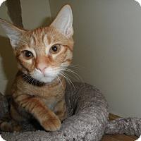 Adopt A Pet :: Rudder - Milwaukee, WI
