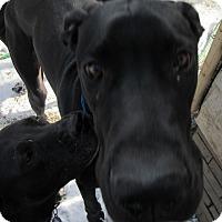 Adopt A Pet :: Thor - Baden, PA