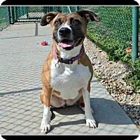 Adopt A Pet :: ALICE - St. Peters, MO