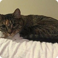 Adopt A Pet :: Storm - Cumberland, ME