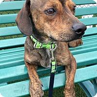 Adopt A Pet :: Buzz - Weston, FL
