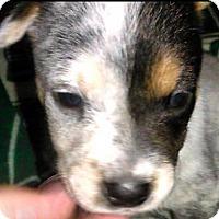Adopt A Pet :: Giles - Coldwater, MI