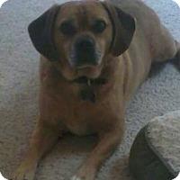 Adopt A Pet :: Dexter - Strasburg, CO