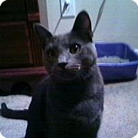 Adopt A Pet :: *Grayson - Winder, GA