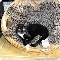 Adopt A Pet :: Miranda - New Port Richey, FL