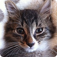 Adopt A Pet :: Jumprope - Brooklyn, NY