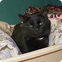 Adopt A Pet :: Gretal - Dover, OH
