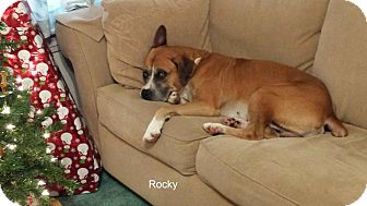 Boxer Mix Dog for adoption in Westminster, Maryland - Rocky