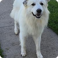Adopt A Pet :: Murphy ADOPTED - Bloomington, IL