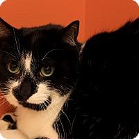 Adopt A Pet :: Mandy - Flushing, MI