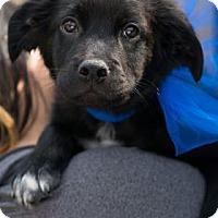 Adopt A Pet :: Coal - Santa Fe, TX