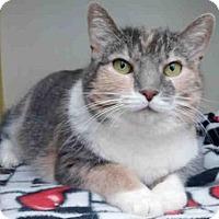 Adopt A Pet :: SHY - Pittsburgh, PA