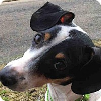 Adopt A Pet :: ABRAHAM - Pittsburgh, PA