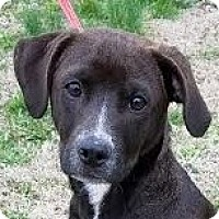 Adopt A Pet :: Diesel Mac - Lexington, KY