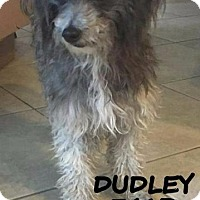 Adopt A Pet :: Dudley - Spring, TX