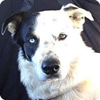 Adopt A Pet :: Zeus - Lexington, KY