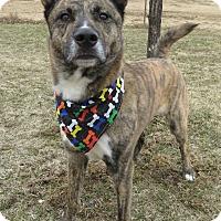 Adopt A Pet :: Percy - Menomonie, WI