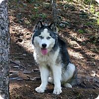 Adopt A Pet :: Baxter - Denver, CO