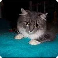 Adopt A Pet :: Willow - Portland, ME