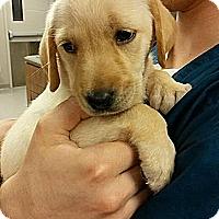 Adopt A Pet :: Robyn - Cumming, GA