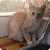 Adopt A Pet :: Sweety (Jeannie's Kittens) - Medford, NJ