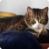 Adopt A Pet :: Teddy - Alexandria, VA