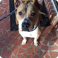 Adopt A Pet :: Morgan - Jasper, GA