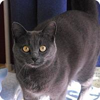 Adopt A Pet :: Bellafina - Winchendon, MA