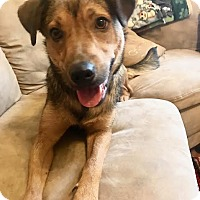 German Shepherd Dog/Labrador Retriever Mix Dog for adoption in Huntingdon, Tennessee - Roxy Girl