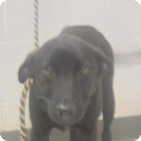 Adopt A Pet :: Marney - Gulfport, MS