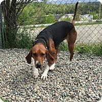 Adopt A Pet :: Prim - Orleans, VT