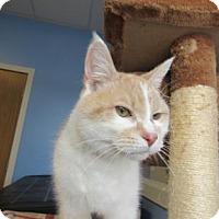 Adopt A Pet :: Oliver - Northfield, MN