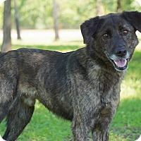 Adopt A Pet :: Buster - Westport, CT